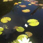 Singing next to a beautiful pond at a wedding gig